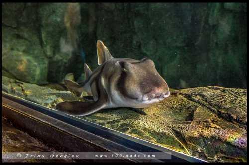 сиднейский аквариум, австралия